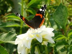 jesienne motyle