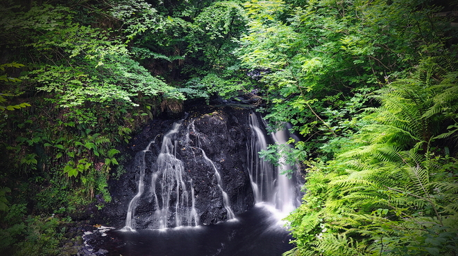 Glenariff Forest - N.Ireland