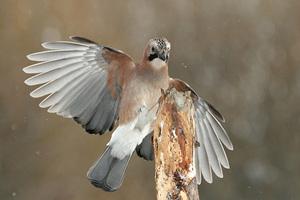 Zimowe fotografowanie ptaków przy karmniku