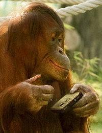 Orangutan z Vienna Tiergarten publikuje fotografie na Facebooku