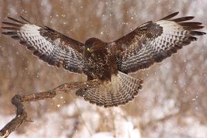 Zimowe czaty - fotografowanie ptaków
