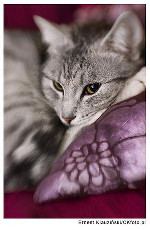 Szkoła cierpliwości, czyli fotografowanie kotów