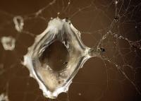 CMOK - organiczna matryca nowej generacji dziełem naukowców z Bostońskiego Instytutu Badań Niedzisiejszych