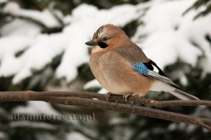 Fotografia przyrody – poradnik, część IV: Zdjęcia ptaków