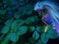 Kobiety Olympusa: recenzja Lidii Popiel