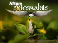 Nikon eXtremalnie III: Gdzie łąki i pola, i bagna po pas,  gdzie natura wciąż dzika - tam fotograficzny raj!