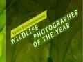 Wildlife Photographer of the Year - twój aparat ma mniej niż 10 megapikseli? Nie weźmiesz udziału w konkursie
