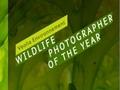 Zwycięskie zdjęcia z Veolia Environnement Wildlife Photographer of the Year 2009