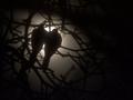 Spotkanie z fotografią przyrodniczą w Wągrowcu