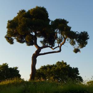 Wakacyjne fotografowanie z Lumixem - część III. Natura