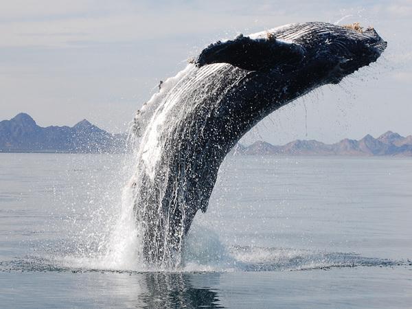 zdjęcia wieloryba