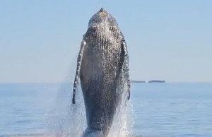 Jak zrobić doskonałe zdjęcia wieloryba? Najpierw go uratuj!
