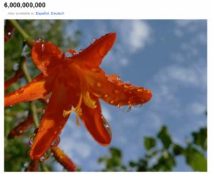 Sześć miliardów zdjęć w serwisie Flickr