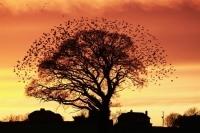 Wyniki British Wildlife Photography Awards 2011. Zobacz najlepsze zdjęcia natury