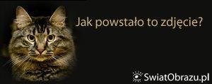 Sony NEX - Jak powstało to zdjęcie: kot