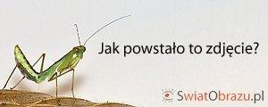Sony NEX - Jak powstało to zdjęcie: owady