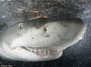 Uśmiech rekina - poznaj historię zwycięskiej fotografii