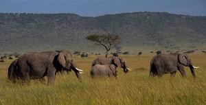 Safari w obiektywie - zobacz zdjęcia laureata konkursu Canon EOS Adventure
