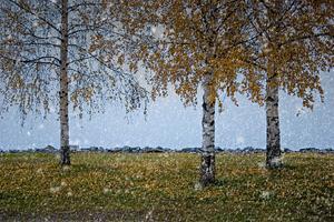 Adobe Photoshop Elements 10: Tworzenie śniegu