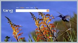 Microsoft aktualizuje wyszukiwarkę obrazów w Bing