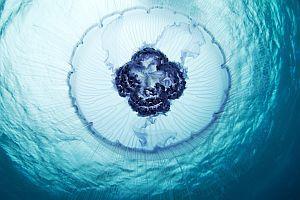 Podwodne fotografie z Arktyki