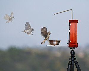 Foto-karmnik dla ptaków - projekt