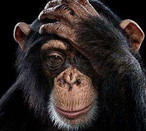 Affinity – cykl niezwykłych portretów dzikich zwierząt autorstwa Brada Wilson