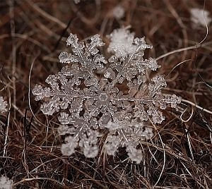 Płatki śniegu na fotografiach Andrei Osokin