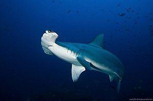 Mistrzowskie fotografie podwodnego świata Alexandra Safonova