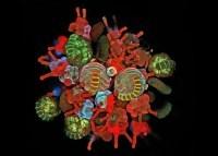 Mikroświat laureatów Olympus BioScapes 2012. Polak na trzecim miejscu