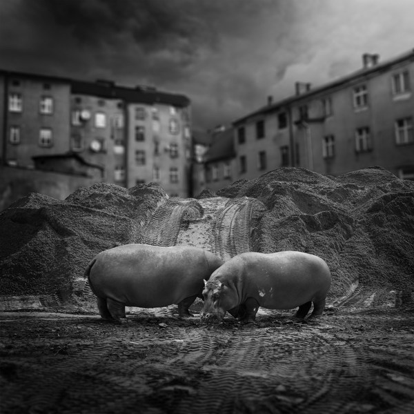 Sony World Photography Awards 2013