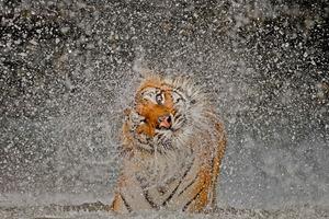 Najważniejsze konkursy fotograficzne świata: National Geographic Photo Contest