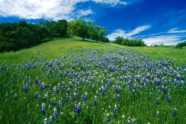 Wiosna kiedyś nadejdzie. Sprawdzone sposoby fotografowania kwiatów