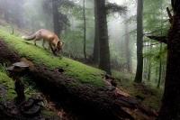 Nature Photographer of the Year 2013 - zobacz niesamowite zdjęcia przyrody