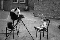 Zwierzęta kochają fotografować