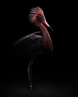 Portret ptaka