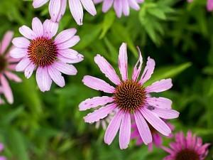 Krótka lekcja kreatywności w fotografii przyrodniczej – studium kwiatka