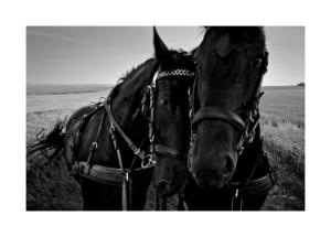 Koń jaki jest, każdy widzi - wyjątkowe ujęcia