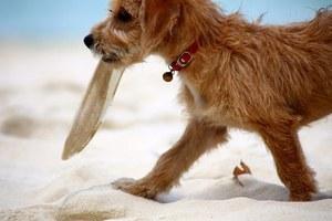 Portret psa - rewelacyjne fotografie