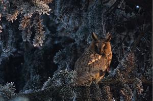 Wildlife photographer of the year 2013 - 17-latek z Polski zdobył nagrodę