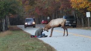 Fotograf winny śmierci jelenia?