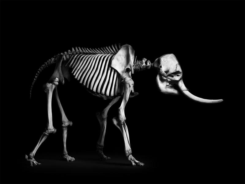 datowanie prędkości ewolucji