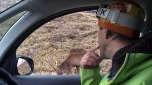 Zdjęcia trzeba robić z  głową - fotograf zaatakowany przez jelenia