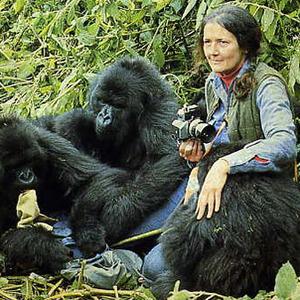 Dian Fossey w Google Doodle z okazji 82 rocznicy urodzin
