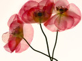 Przeźroczyste kwiaty - praktyczny poradnik na wiosnę