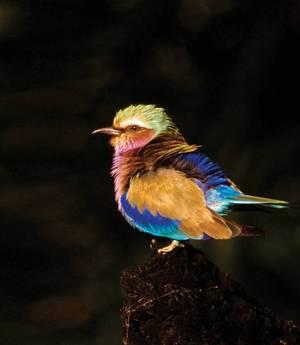 Fotografia przyrodnicza w kolorze, cz I