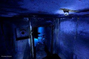 Pierwsze cztery zwycięskie zdjęcia konkursu Wildlife Photographer of the Year 2014 - wśród nich polska fotografia