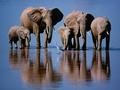 Najlepsze ujęcia natury na przestrzeni 50 lat: czyli jak fotografia dzikiej przyrody stała się sztuką