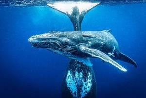 10. edycja Wielkiego Konkursu Fotograficznego National Geographic została rozstrzygnięta