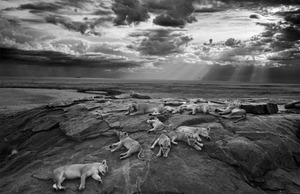 Zwycięzcy konkursu Wildlife Photographer Of The Year 2014